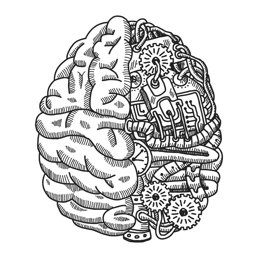 Two halves of the brain